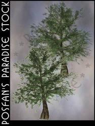 Summer Tree 006 Oak by poserfan-stock