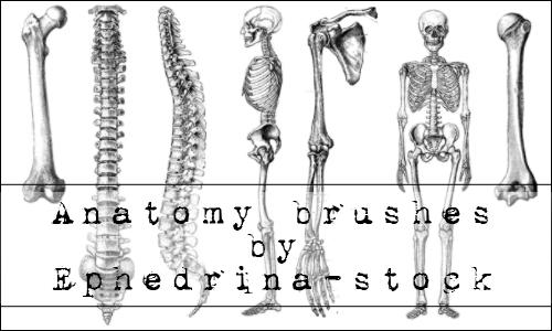 Anatomy brushes by ephedrina-stock