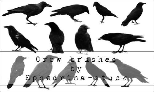 Crow brushes by ephedrina-stock