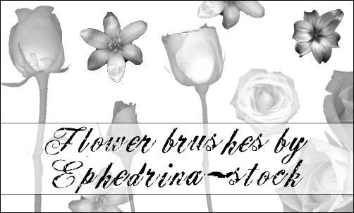 Flower brushes by ephedrina-stock