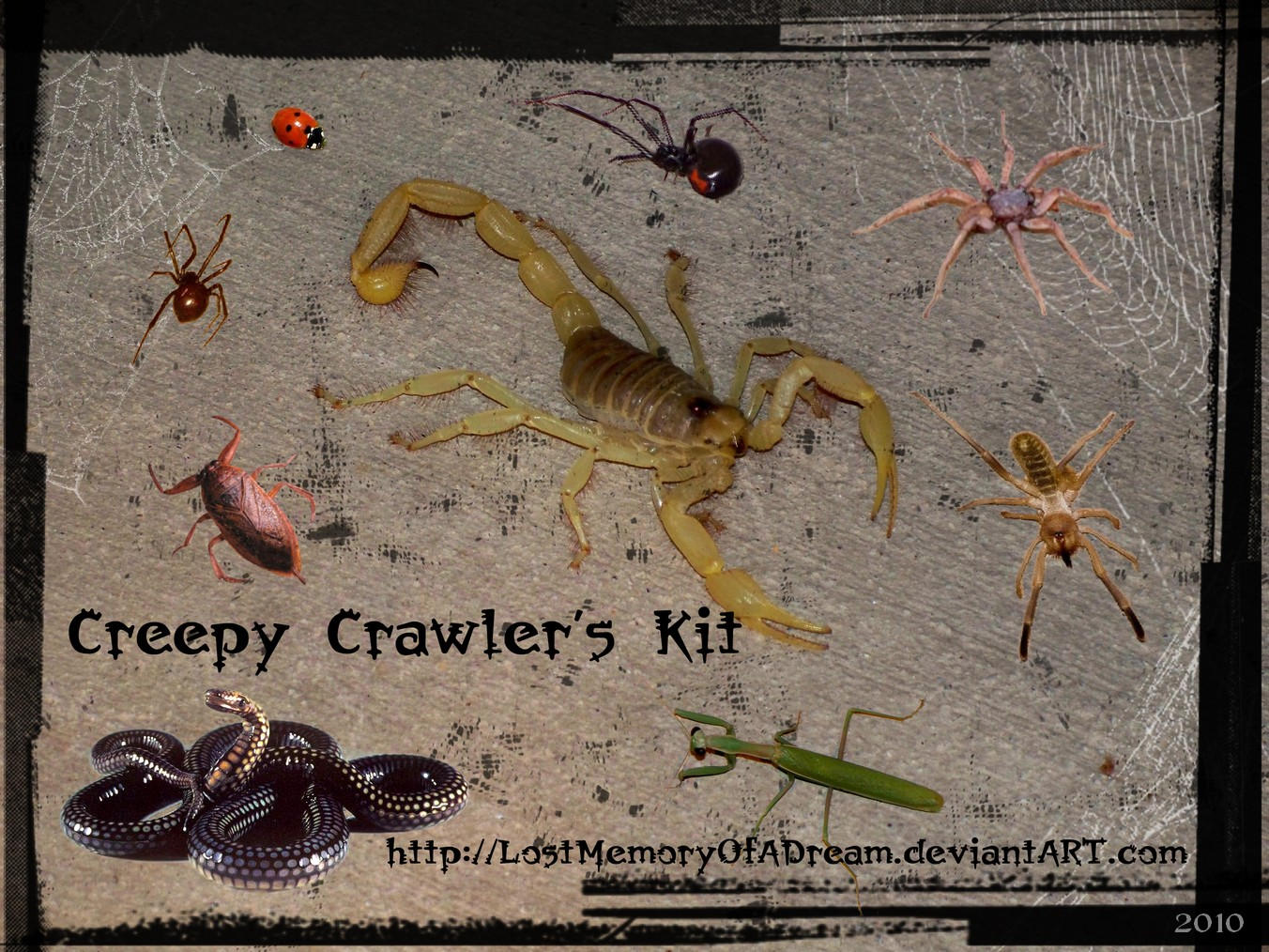 Creepy Crawler's Kit by LostMemoryOfADream