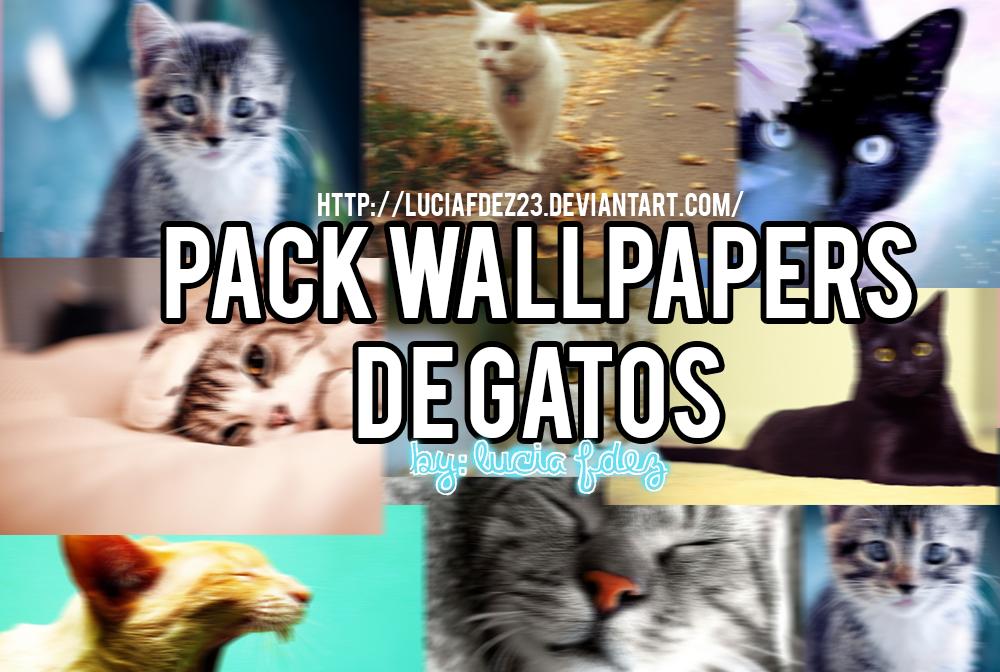 Pack de Wallpapers de Gatos by luciafdez23