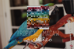 tropical macaw swatches