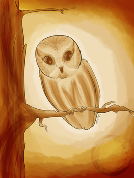 Sunday Sketch 39 | Northern Saw-whet Owl