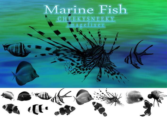 Marine Fish Brush Set by cheekysneeky