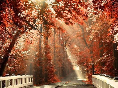 The Bridge by PandaChick0508