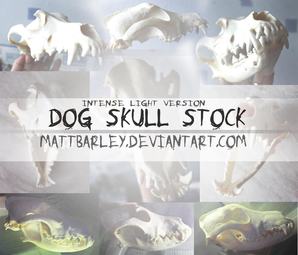 DOG SKULL STOCK: Intense light version by MattBarley