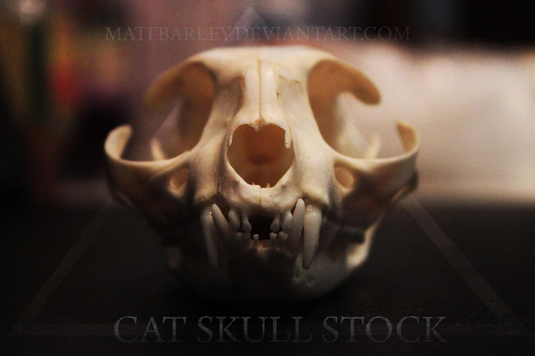 Cat skull stock by MattBarley