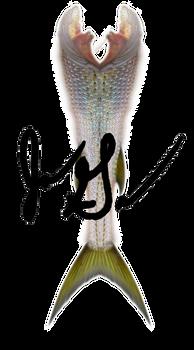 Mermaid Tail 1