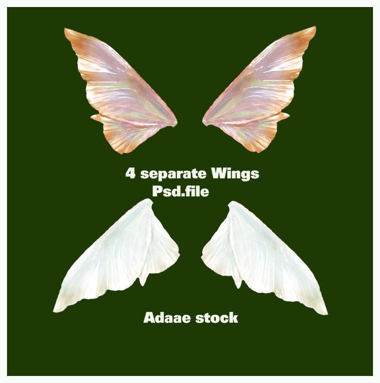 Wings by Adaae-stock