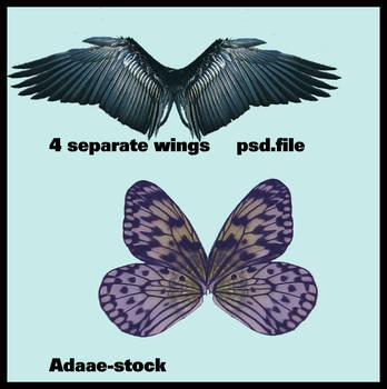 Wings 4 by Adaae-stock