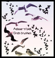 birds brushes by Adaae-stock