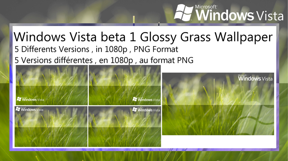 windows vista beta 1 glossy grass wallpaper packteknorider on