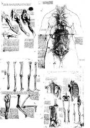 Da Vinci Body Sketches Brush