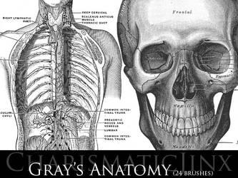 Gray's Anatomy by CharismaticJinx
