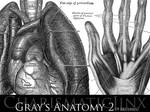 Gray's Anatomy 2