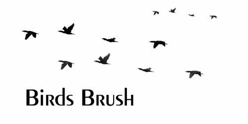 Birds Brush by sd-stock