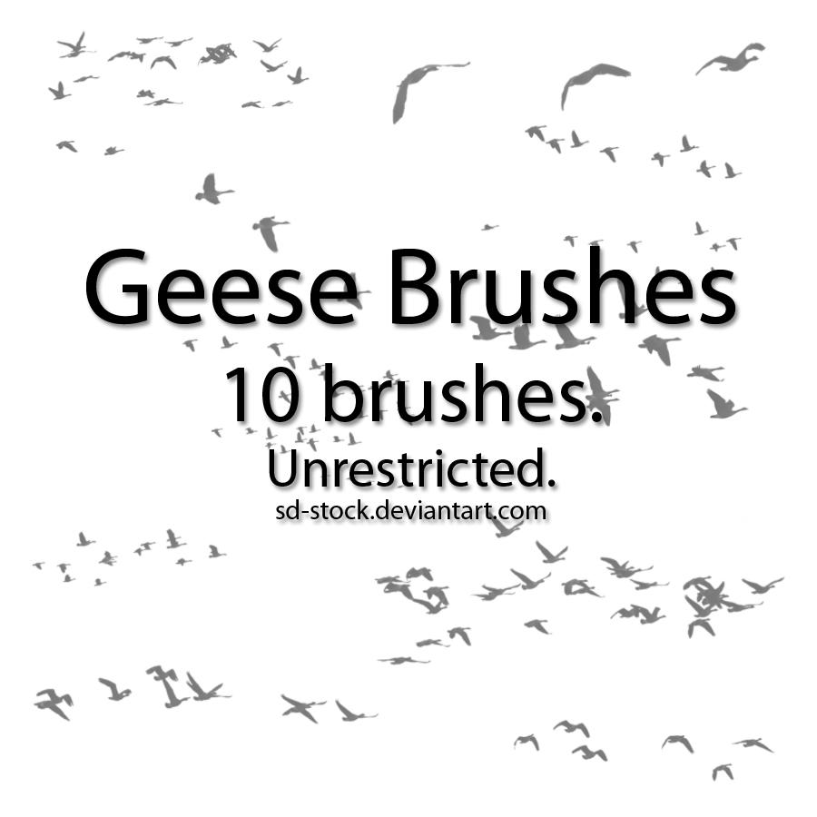 Geese Brushes by sd-stock