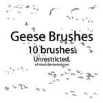 Geese Brushes