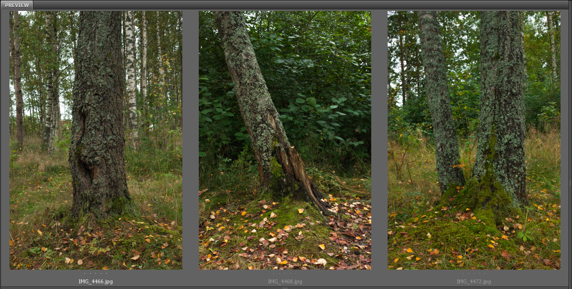 Tree Trunk by ManicHysteriaStock