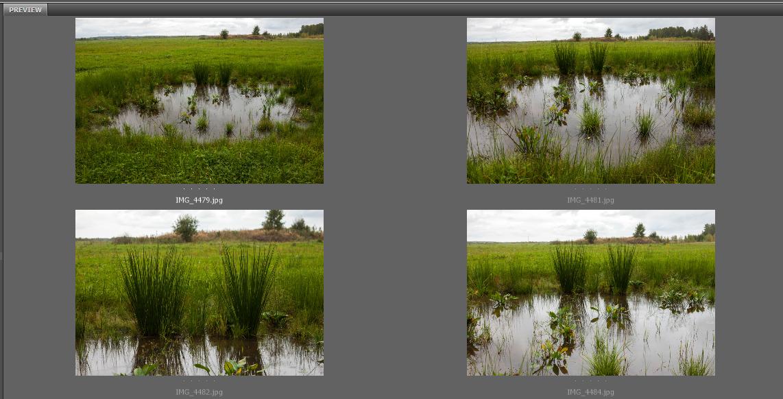 Swamp by ManicHysteriaStock