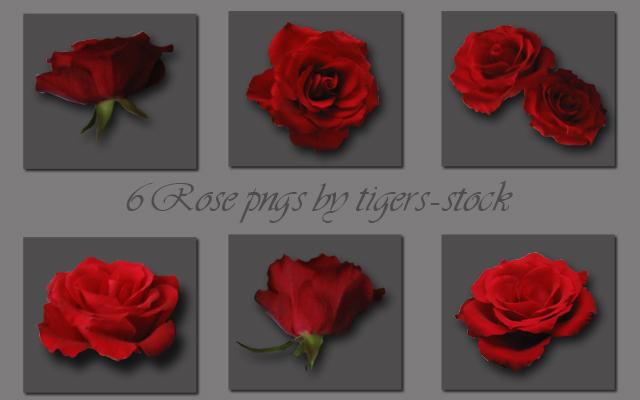 066 Rose pngs