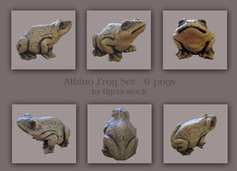 101 Albino Frog by Tigers-stock