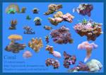 287 Coral Cutout