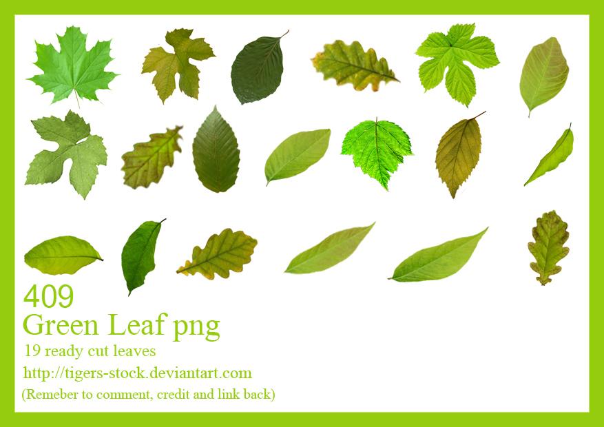 409 Green Leaves