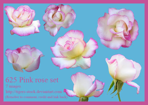 625 Pink Rose Set By Tigers-stock