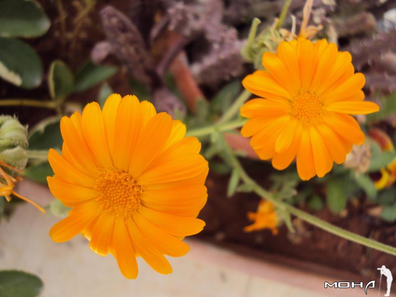 Orange by mohaafterdark