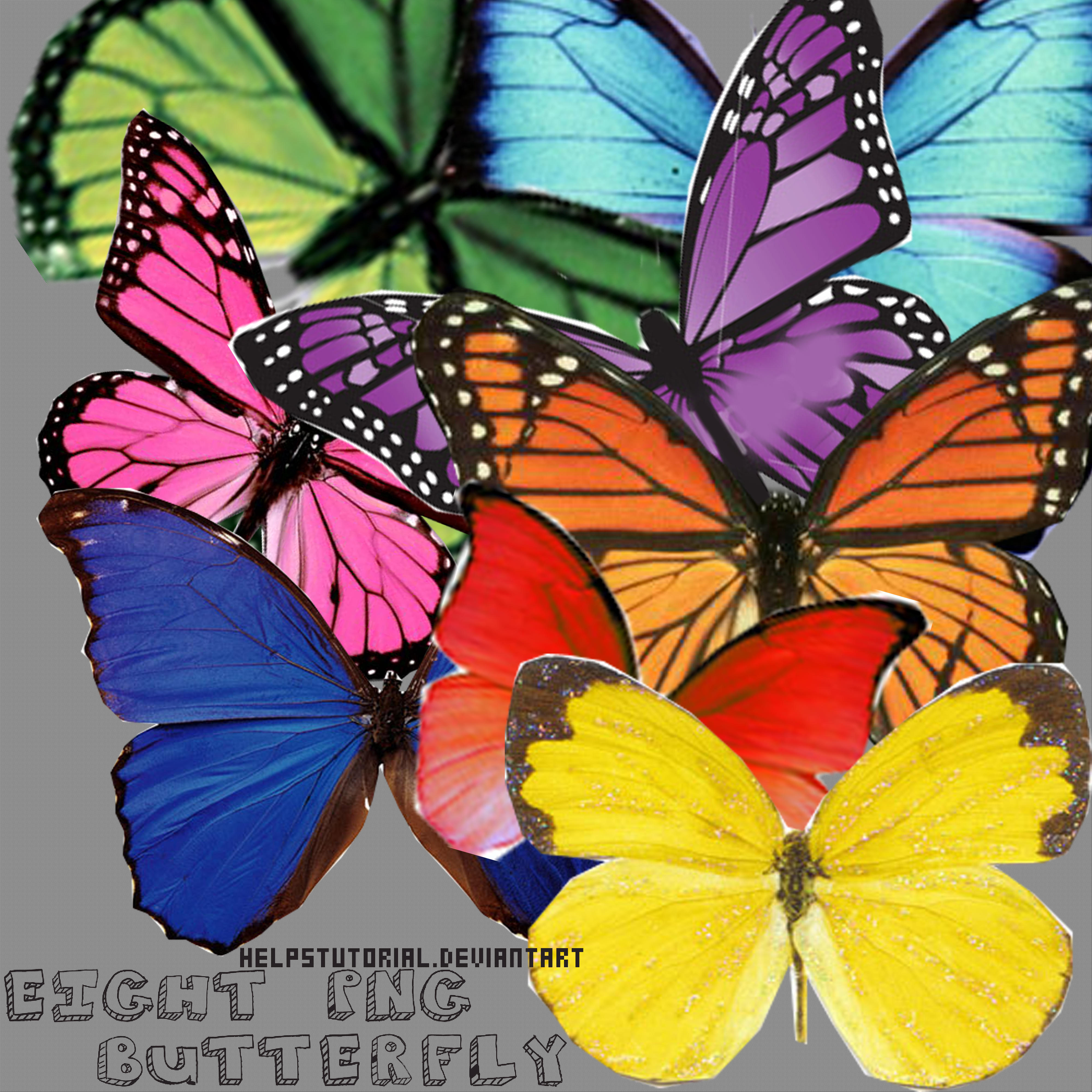 Eight Butterfly PNG- by helpstutorial