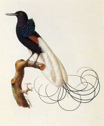 Oozlum Bird [Trippy Animations] by FabioRosado