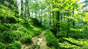 Afternoon forest path...