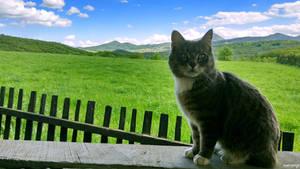 A Cat for your Desktop