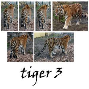 tiger 3 pack