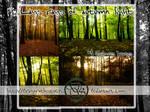 Last Rays Of Autumn Light - Stockpack