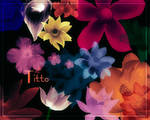 Lotus Flower by Titto