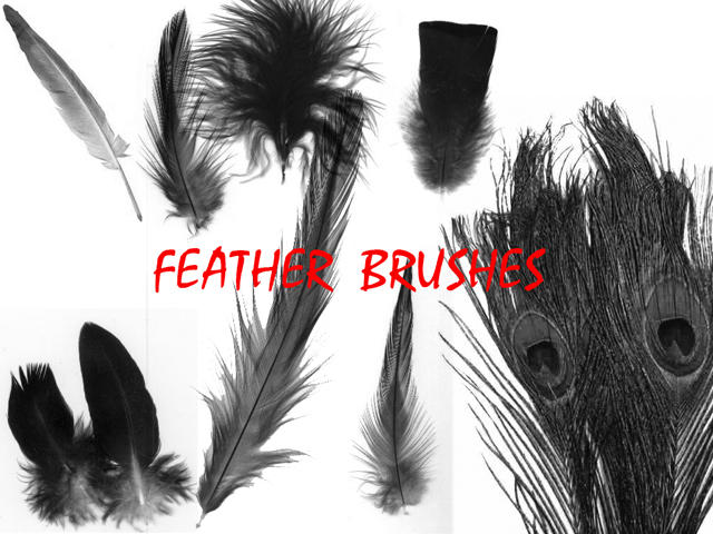 Feather Brushes by LoS-Stock