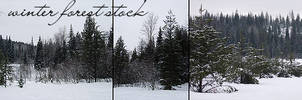 Winter Forest Stock