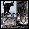 Tiger Kitty Stock by Spiteful-Pie-Stock