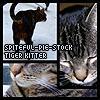 Tiger Kitty Stock by Spiteful-Pie-Stock