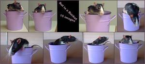 Rat Storage by Spiteful-Pie-Stock