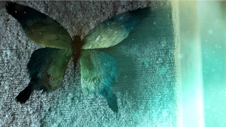 The butterfly's sowing - Animation made with Blend