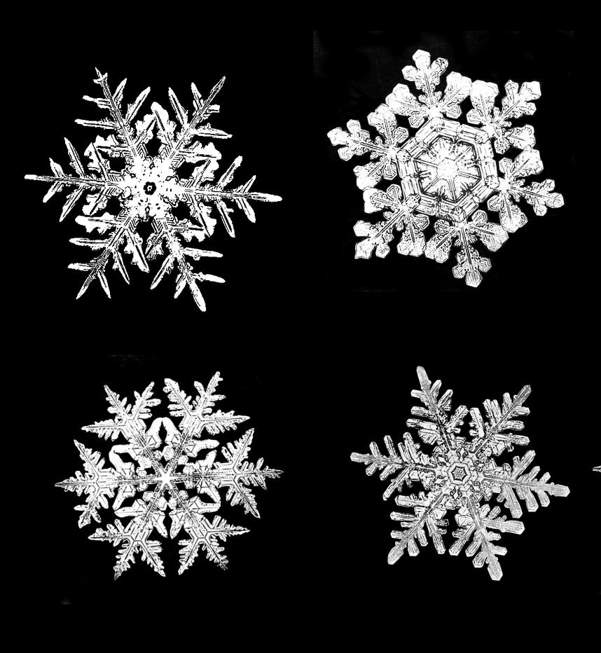 Bentley Snowflake Brushes by muffet1