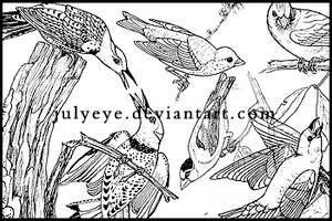 birds by julyeye