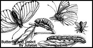 butterfly brush by julyeye