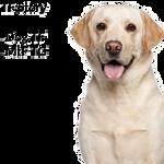 Revenge - Dog TF/TG [MtF] [Commission] by Roundabbout
