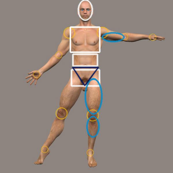 Male anatomy reference model by Yunie-B on DeviantArt