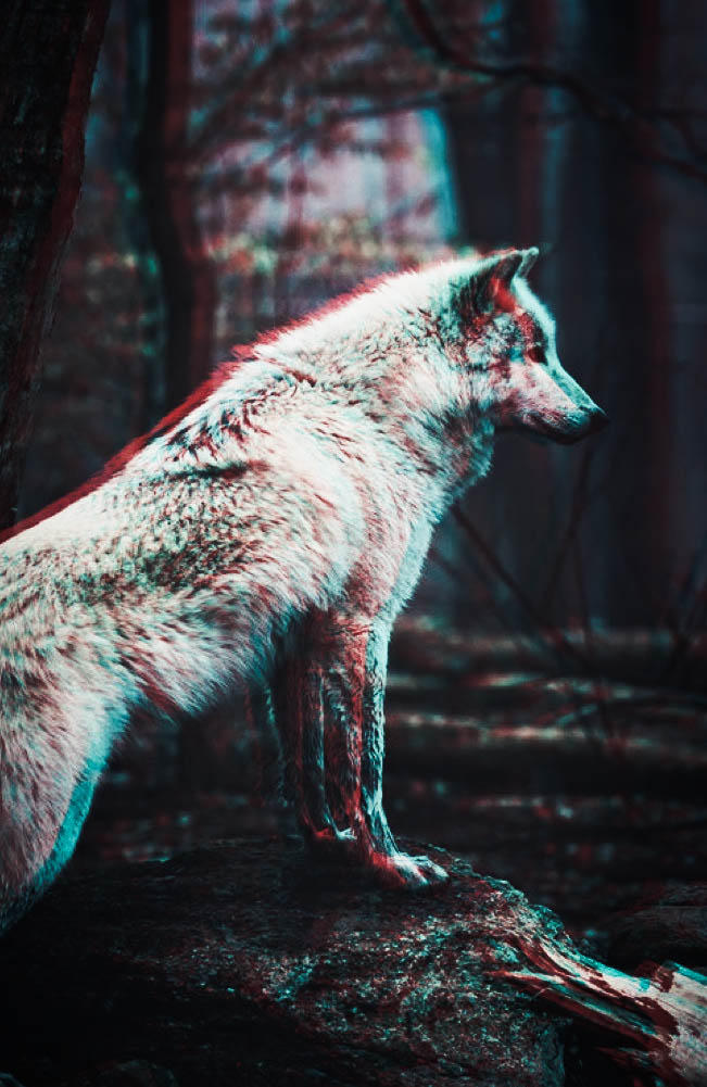 Wolf Wallpaper Pack By Prolite